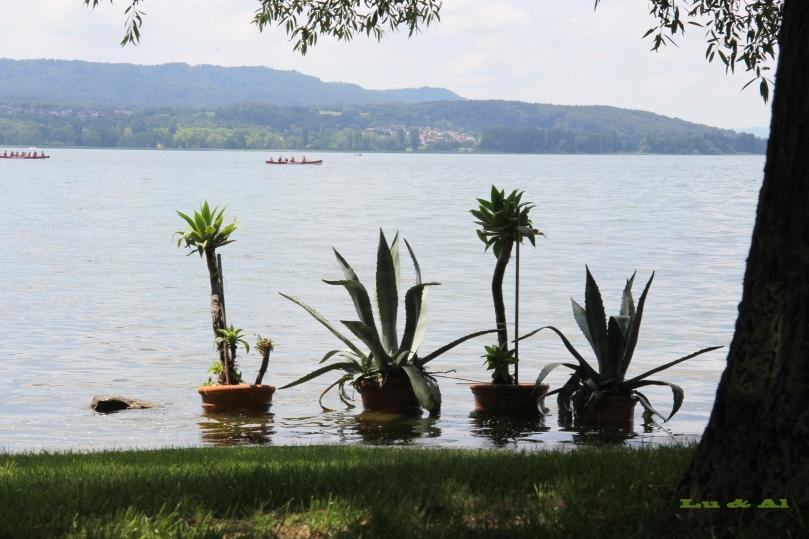 Hochwasser am Bodensee